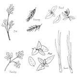 Нарисованные рукой травы специи иллюстрация штока