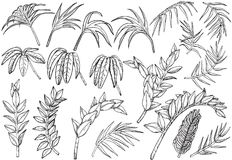 Нарисованные рукой тропические установленные заводы джунглей ладони бесплатная иллюстрация