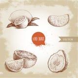 Нарисованные рукой установленные цитрусовые фрукты стиля эскиза Лимон половинный, известка, tangerine, часть мандарина, апельсины Стоковое Изображение RF
