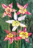 Нарисованные рукой цветки изображения Стоковое Изображение RF