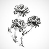 Нарисованный вручную букет 3 цветков предпосылки года сбора винограда пионов Стоковое Изображение RF