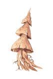 Нарисованный вручную эскиз дерева Стоковая Фотография RF