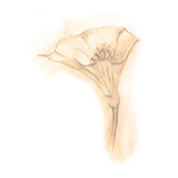 Нарисованный вручную эскиз фантастического цветка Стоковая Фотография RF