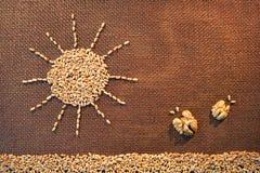 Нарисованный зернами пшеницы грейте на солнце светить над полем Стоковое Фото