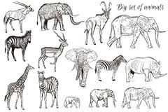 Нарисованный комплект вектора руки детализировал африканское животное иллюстрация штока