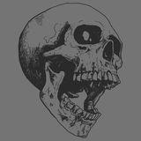 Нарисованный рукой вектор черепа Стоковое Фото
