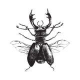 Нарисованный рукой жук оленей Стоковое Изображение