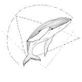 Нарисованный рукой кит вектора Стоковое Изображение
