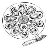 Нарисованный рукой комплект устрицы эскиза Иллюстрация эскиза свежих морепродуктов Стоковое фото RF