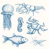 Нарисованный рукой комплект морской флоры и фауны Стоковое Изображение RF