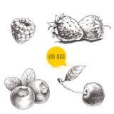 Нарисованный рукой комплект ягод стиля эскиза на белой предпосылке Поленика, клубника, вишня и голубика иллюстрация вектора