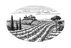 Нарисованный рукой ландшафт виноградника Стоковая Фотография