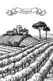Нарисованный рукой ландшафт виноградника Стоковое Изображение RF