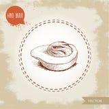 Нарисованный рукой плодоовощ жезла муската стиля эскиза свежий Иллюстрация вектора специи и condiment Вкус и восточное изображени Стоковые Фото