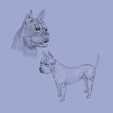 Нарисованный рукой портрет собаки Стоковые Фотографии RF