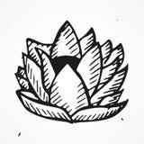 Нарисованный рукой цветок лотоса Стоковые Изображения RF