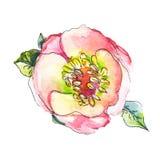 Нарисованный рукой эскиз акварели roseship Стоковые Фотографии RF