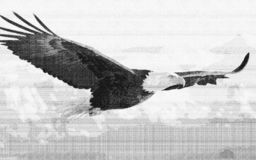 Нарисованный эскиз покрасил орла иллюстрация штока