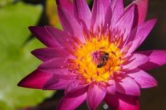 Насекомое в цветке Стоковые Изображения RF