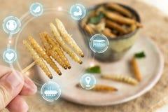 Насекомое еды: Рука женщины держа бамбуковое насекомое червя для еды как закуска еды глубок-зажаренная в плите на питании дерюги  стоковое изображение rf