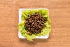 Насекомое еды Стоковые Фотографии RF