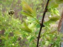 Насекомое и цветок Стоковое Фото