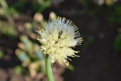 Насекомое и цветок Стоковые Изображения
