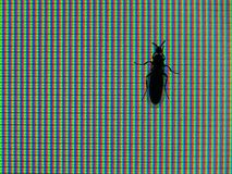 Насекомое монитора RGB Стоковые Изображения