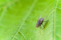 Насекомое мухы в одичалом Стоковое Изображение RF