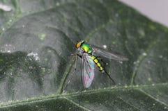 Насекомое мухы в реальном маштабе времени Стоковое Изображение RF