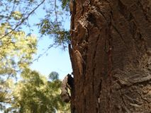Насекомое на дереве Стоковые Фото