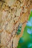 Насекомое на дереве стоковая фотография