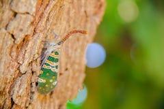 Насекомое на дереве стоковая фотография rf