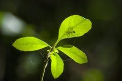 Насекомое на зеленой траве стоковое изображение rf