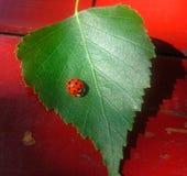 Насекомое на листьях Стоковое Изображение