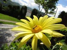 Насекомое на цветке Стоковые Изображения RF