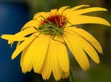Насекомое на цветке Стоковое Фото