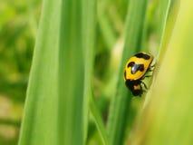 насекомое, одичалое, живая природа, зеленая стоковое изображение