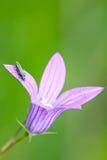 насекомое цветка Стоковое Фото
