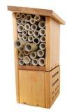 насекомое черепашки коробки деревянное стоковое фото