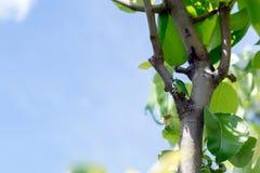 Насекомое экзотического bronzovka жука одичалое в стиле акварели изолированное на ветви Стоковое Изображение
