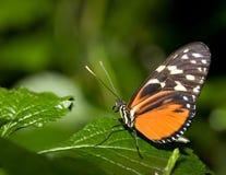насекомое 007 Стоковые Фотографии RF
