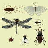 насекомое Иллюстрация вектора