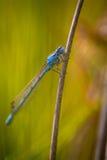 насекомое Стоковое Фото