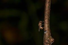 насекомое стоковые фотографии rf