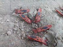 насекомое Стоковые Изображения RF