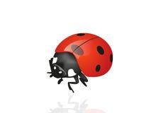 насекомое стоковое изображение