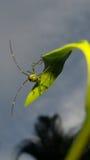 насекомое стоковые фото