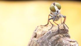 насекомое Стоковое фото RF