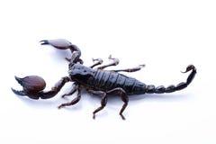 насекомое стоковое изображение rf
